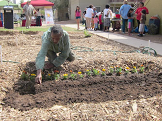 Volunteer helping plant a garden